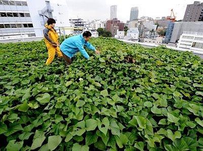 Os japoneses estão aproveitando a cobertura dos edifícios para cultivar hortas