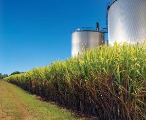 Brasil é citado como exemplo positivo ao extrair etanol da cana de açúcar
