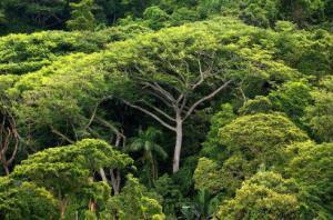 Segundo o WWF, a Mata Atlântica abriga mais 20 mil espécies de planta, das quais 8 mil não são encontradas em nenhum outro lugar