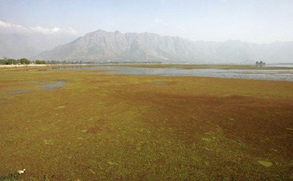 O Lago Dal, na Caxemira, poluído por décadas de negligências das autoridades e pela revolução separatista, se mantém atração turística apesar de ter sua área reduzida de 25 quilômetros quadrados para 13 quilômetros quadrados desde 1980. Foto de Faval Kabili∕Reuters.