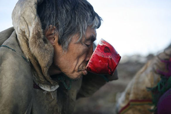 Criadores de rena comem a carne crua e bebem o sangue do animal